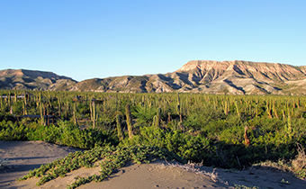 La Duna ecology center la paz baja california sur cacti forest